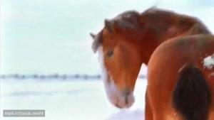 برف بازی اسب ها 😂😂