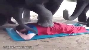 ماساژ فیل در تایلند فقط اون بچه فیل