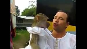 کدوم میمون بود ؟