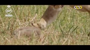 شکارچیان بزرگ آفریقا