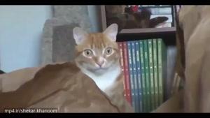 تعجب عجیب یک گربه از رباتی شبیه خودش