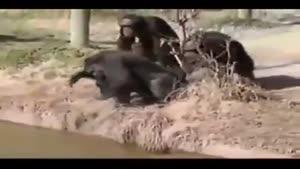 شوخی میمون ها