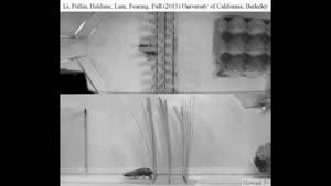ربات با قابلیت شبیه سازی رفتار سوسک ها