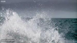 تصاویر بی نظیری از لحظه شکار شیردریایی توسط کوسه
