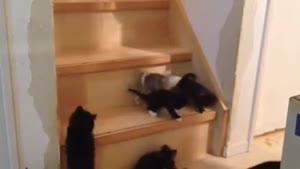 بچه گربه های بامزه