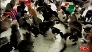 زنی از بیش از صد گربه در یک اتاق نگه داری میکند !