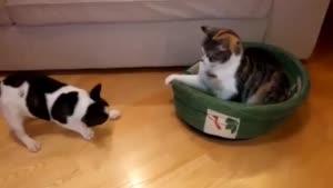 گربه ی به این ریلکسی کی دیده تا حالا؟؟؟؟