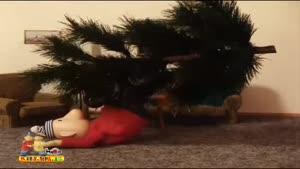 پت و مت - درخت کریسمس