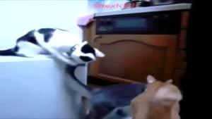 شوخی گربه ها با هم