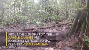 تا حالا سگ جنگلی را از نزدیک دیده اید