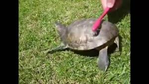 اذیت کردن لاکپشت