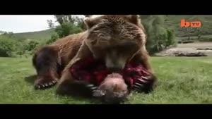 مردی که با خرس پیر خود زندگی میکند
