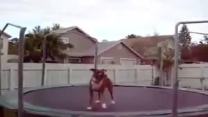 سگ بازیگوش ۳