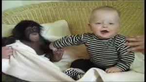 بازی کردن نی نی با بچه میمون بانمک