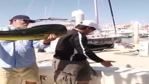 دلفین ماهی دزد
