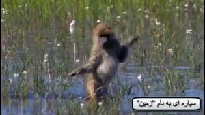حق زندگی حیوانات کره زمین به فارسی