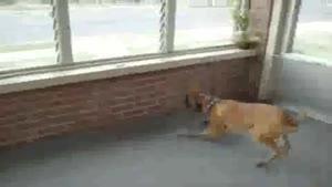 سگ ترسو (خنده دار)