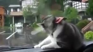 سرعت عمل بالای گربه