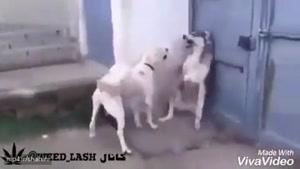 یه دوبله بی نظیر - ترکیدم از خنده )))