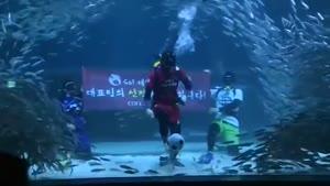 اکواریوم جام جهانی در کره جنوبی