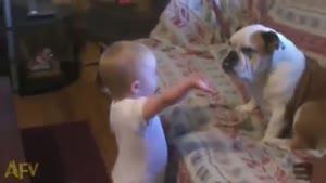بحث جدی بچه و سگ