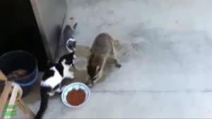 حرکات جالب حیوانات خانگی