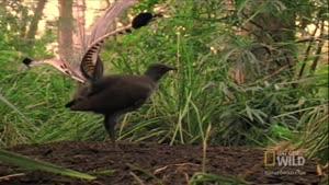 شعبده پرندگان