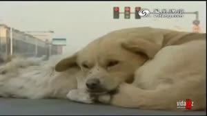 ویدئویی تکان دهنده از عشق و وفای سگ