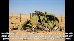 ۱۰ گیاهان عجیب و غریب و ترسناک