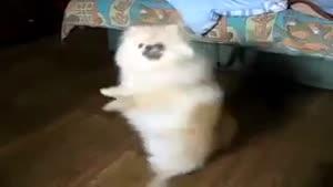 رقص اسپانیایی توله سگ