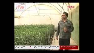 مستند جالب پرورش گل در ایران