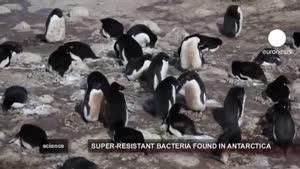 باکتری های فوق مقاوم به آنتی بیوتیک