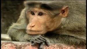 کاش بعضیا ازین میمون یاد بگیرن