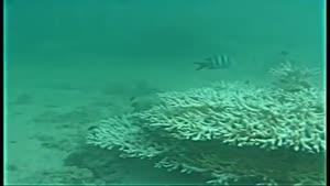 مرگ مرجانهای جزیره کیش ۱۳۸۶