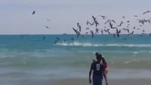 شکار مرغ های ماهی خوار
