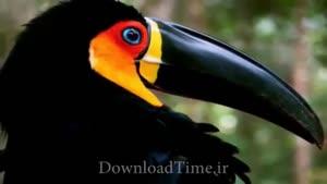 تصاویر زیبا از پرندگان زیبا