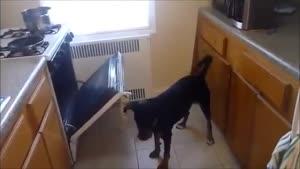 حیوانات خانگی با هوش