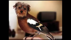 شباهت زیاد بعضی سگا به پرنده ها