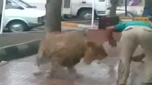شستن شیر وسط خیابان مولوی با شیلنگ