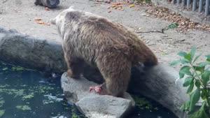 نجات پرنده توسط خرس در باغ وحش