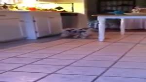 سگ بازیگوش