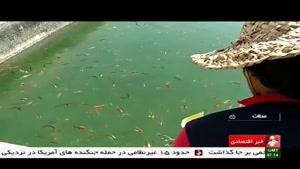 Iran Mahalat county, Aquarium fish farming پرورش ماهيان تزئيني شهرستان محلات ايران