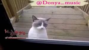 گربه عجیبی که سعی دارد حرف بزند ...به تازگی این کلیپ همه دنیارا شگفت زده کرده !!!!!!!!!!!