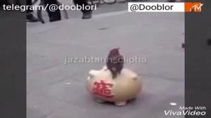 گدایی کردن پرندگان در خیابان های اروپا
