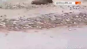 مسابقه خشن کشتی کج دوبله شده توسط عمو جلال