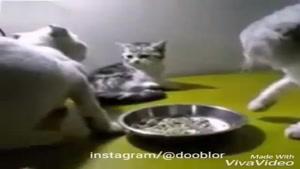 دعوای عجیب گربه ها
