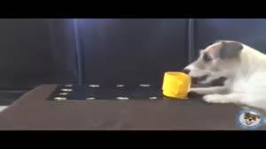 سگ کاری