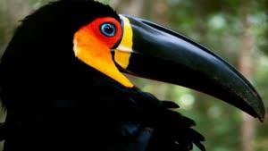 پرندگان زیبا