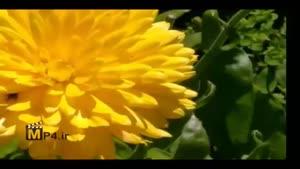 ترتیل حزب ۵۶ قرآن کریم با ترجمه گویای فارسی