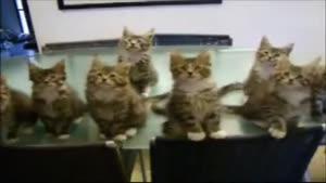 رقص گروهی گربه ها